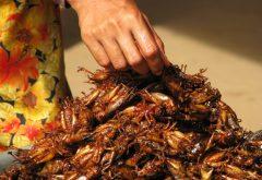 Grasshopper a la Mode: Nourishing Millions Podcast Series Launches